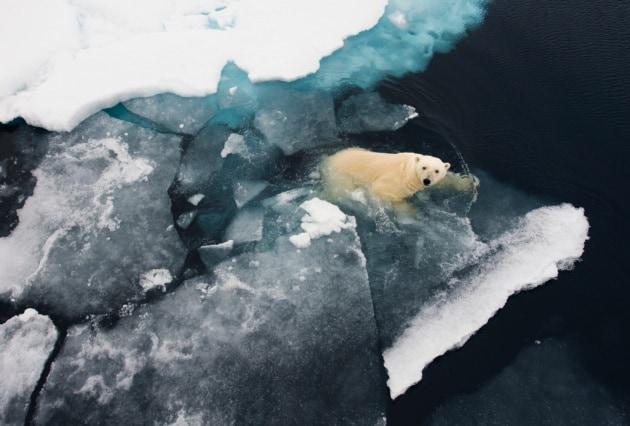 Il secondo record minimo dei ghiacci artici
