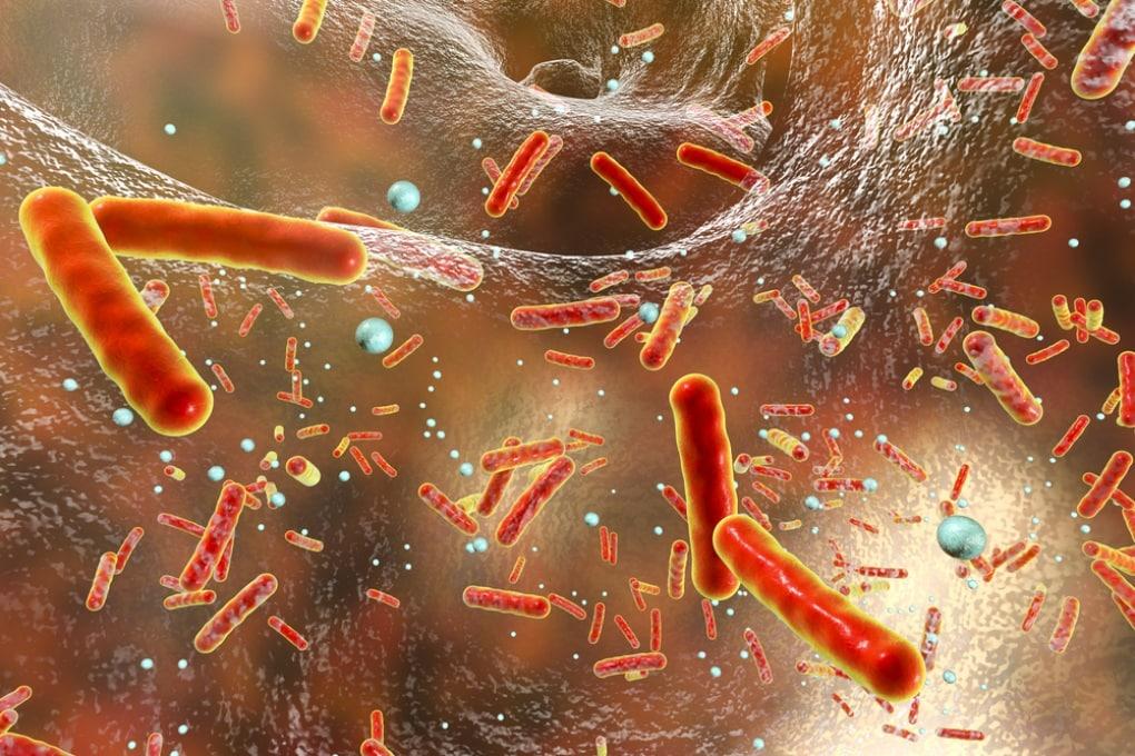 Anche i batteri hanno il senso del tatto