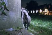 Gli animali cambiano abitudini (per evitarci)