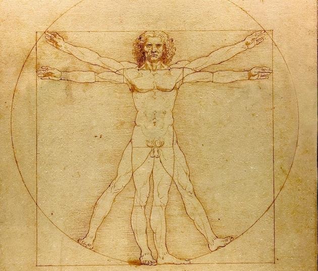 Il nuovo organo del corpo umano