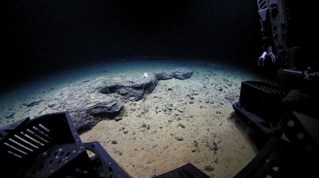 Inquinamento fin nelle profondità della Fossa delle Marianne