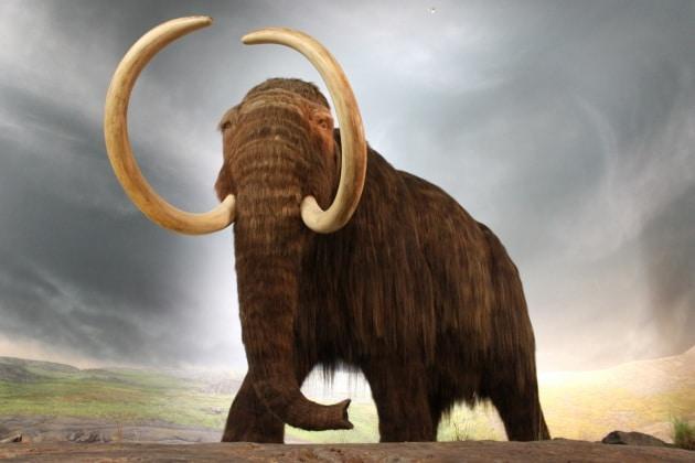 Il collasso genetico degli ultimi mammut lanosi