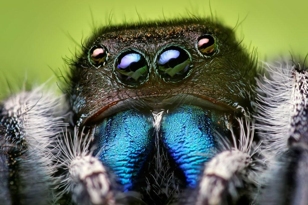 I ragni non hanno orecchie. Ma ti sentono arrivare
