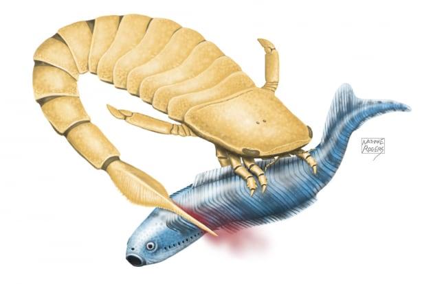La codata letale dello scorpione di mare