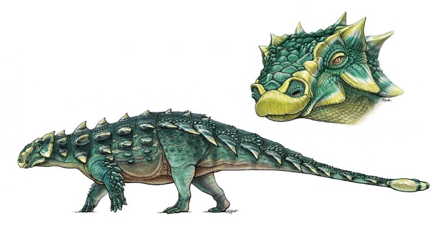 Zuul, l'anchilosauro distruttore di stinchi