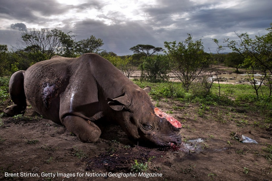 074_brent-stirton_getty-images_national-geographic-magazine