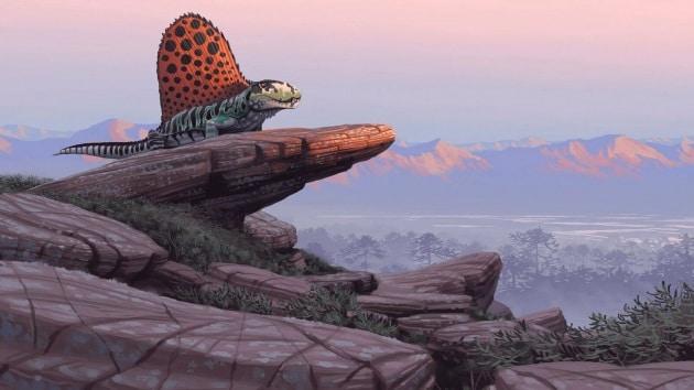 300 milioni di anni fa: la diminuzione della foresta pluviale favorì rettili e mammiferi