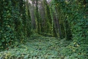 censimento della flora vascolare italiana
