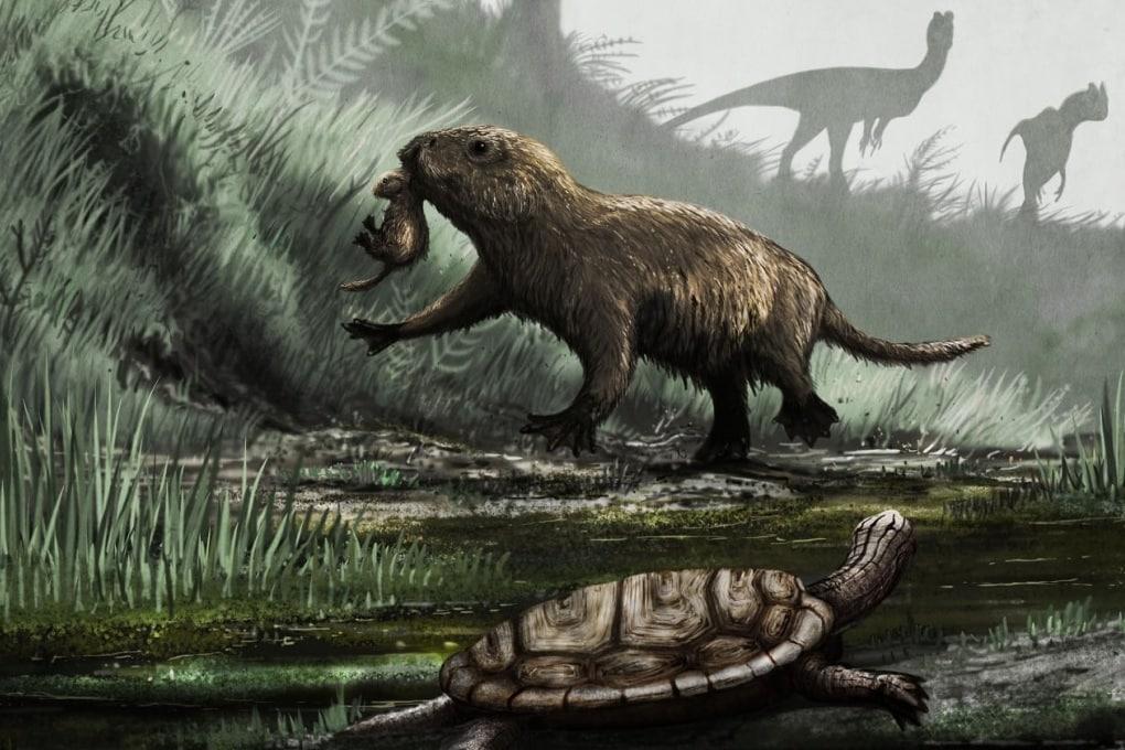 Scomparsi i dinosauri, i mammiferi videro la luce