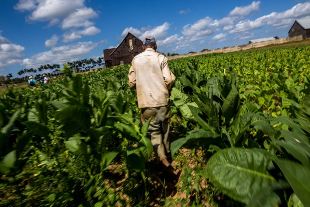 Piante OGM più efficienti nella fotosintesi