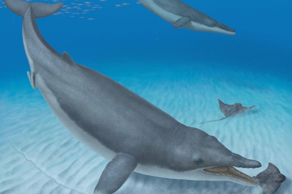 Scoperta la più antica balena fossile