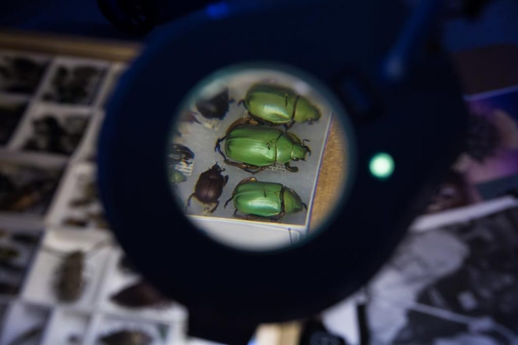 La collezione di insetti che vale 12 milioni di dollari