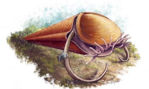 Finalmente classificata una creatura di oltre 500 milioni di anni fa