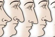 Forma del naso, adattamento climatico e riproduzione