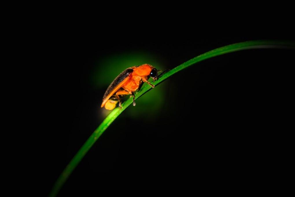 Le cellule bioluminescenti che si vedono attraverso i tessuti