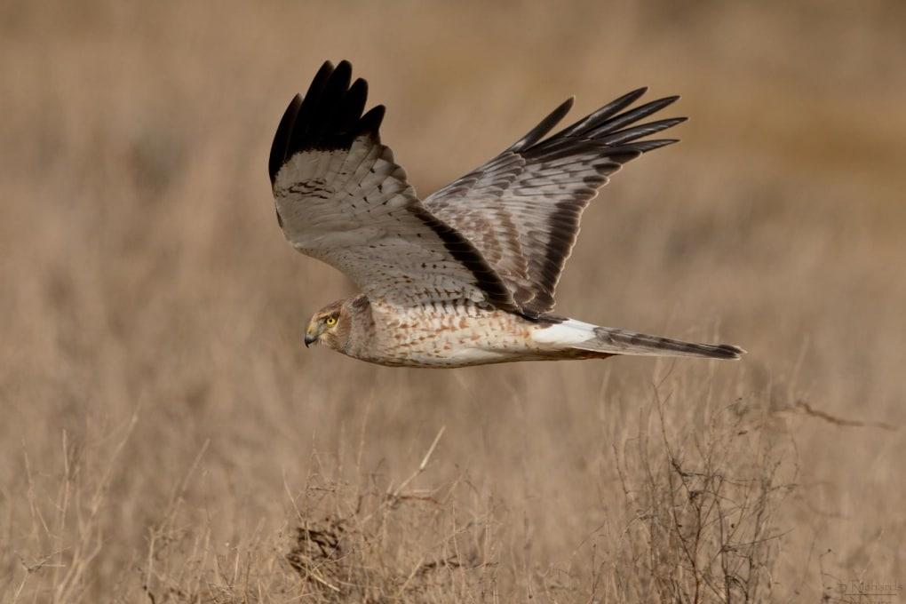 Quante sono le specie di uccelli?
