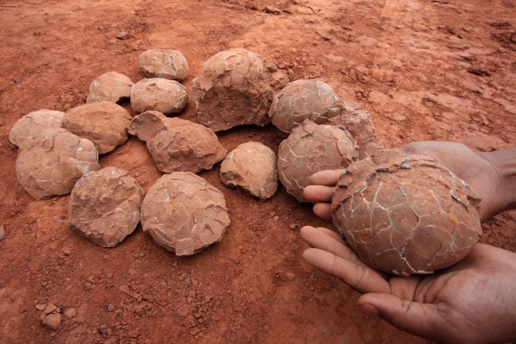 Uova di dinosauro: in quanto tempo si schiudevano?