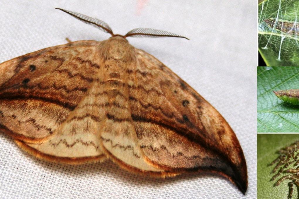 Una storia di falene, farfalle e pipistrelli