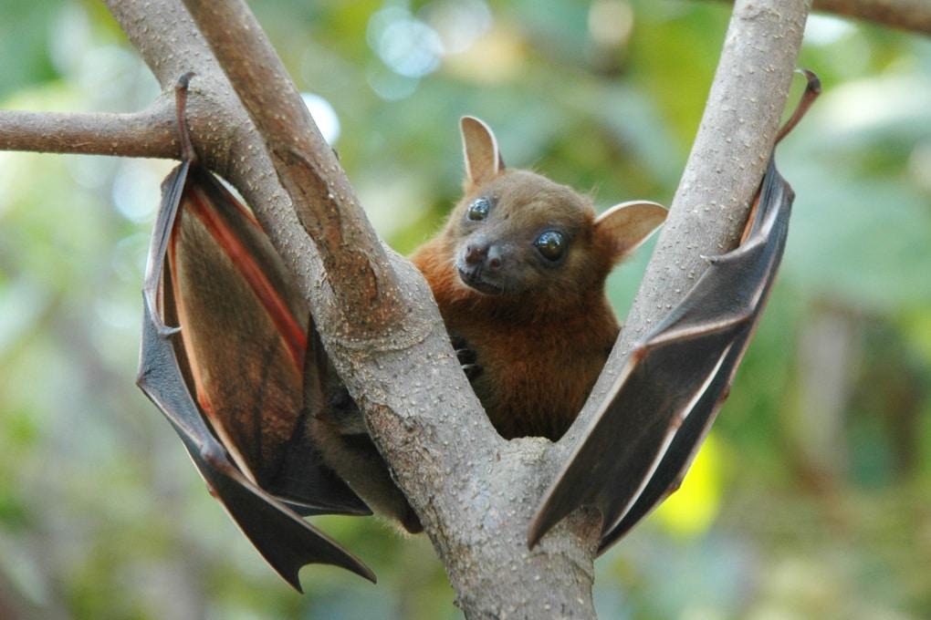 5 cose che (forse) non sai sui pipistrelli