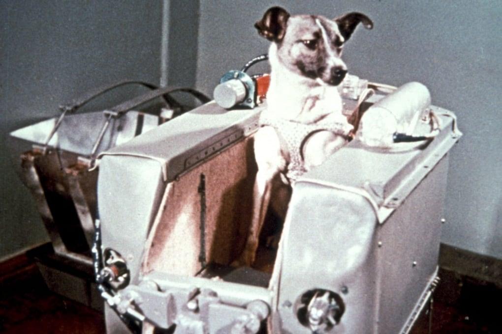 Laika, sacrificata nella Corsa allo Spazio