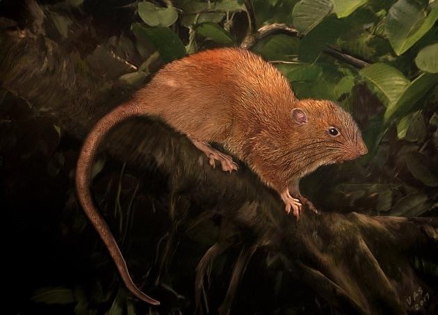 rattogigante