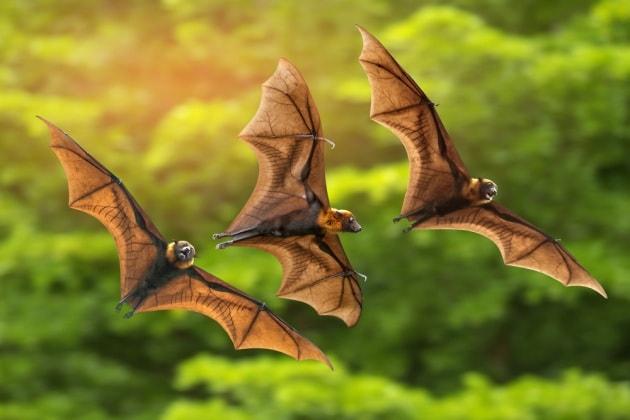 10 cose che (forse) ancora non sai sui pipistrelli