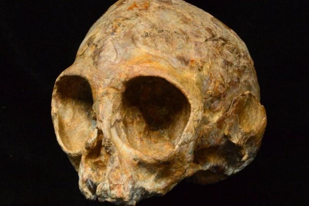 Nyanzapithecus alesi: molto prima di uomini e scimmie