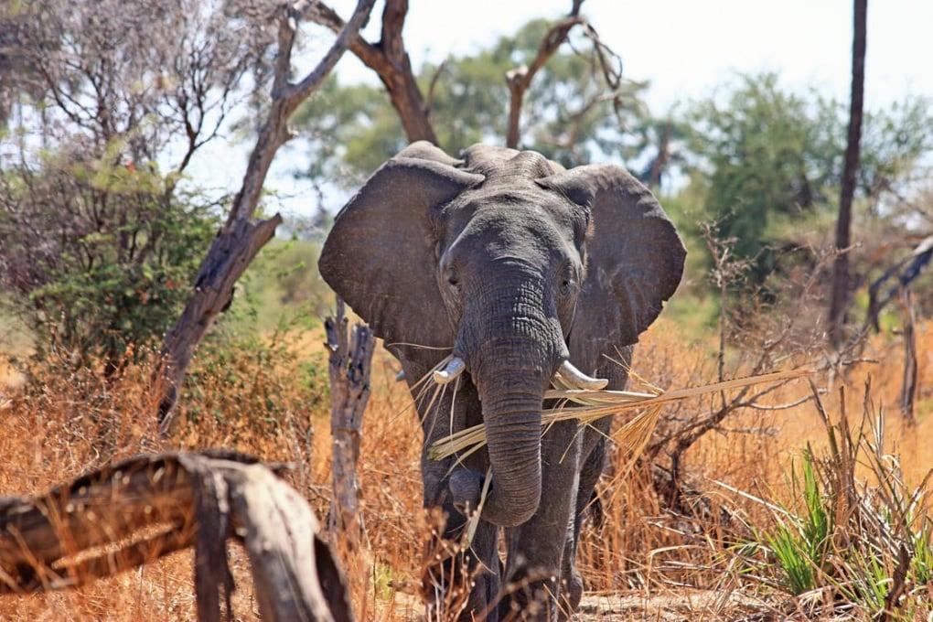 Il terremoto che può salvare gli elefanti