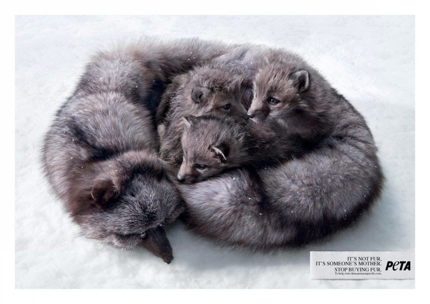 peta-mother-fox-print-381484-adeevee