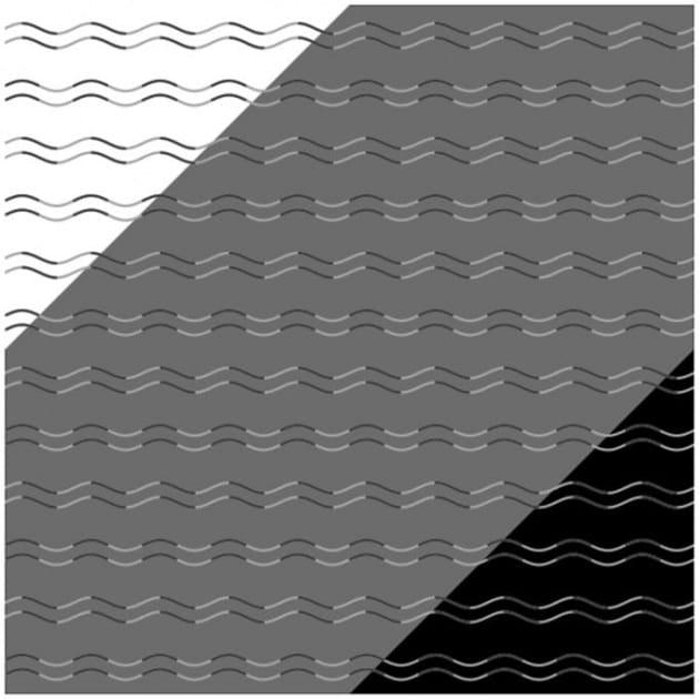 Queste linee sono curve o a zigzag? Una sorprendente illusione ottica