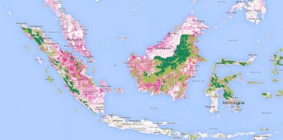 olio di palma, biodiversità