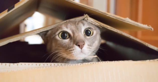 7 luoghi comuni sui gatti