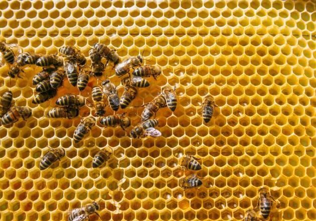 Tre insetticidi messi al bando dall'Europa