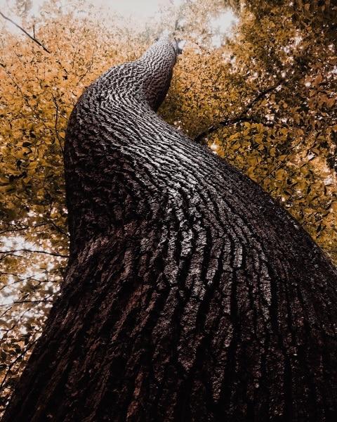 2ndplace-trees-dyllon-wolf