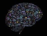 brain-998993_1920