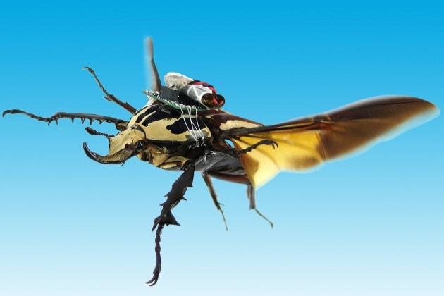 Lo scarabeo cyborg, col volo telecomandabile