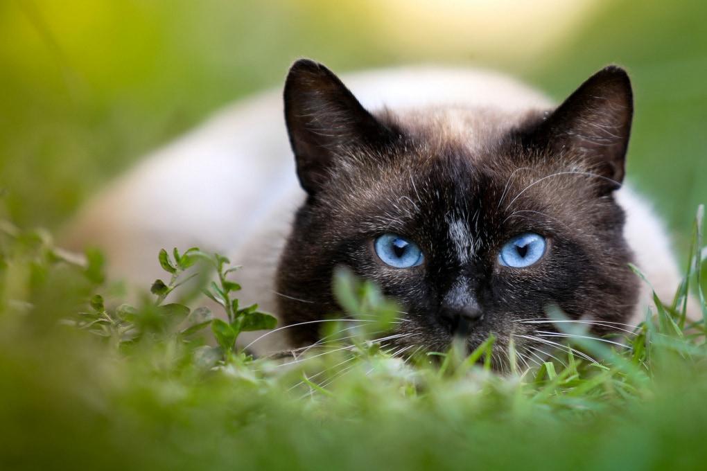 Gatti, farfalle, pesci rossi e altri animali: come vedono il mondo?
