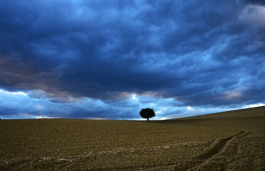 sentinella-amorvena-mengarelli