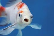 pesci-dolore