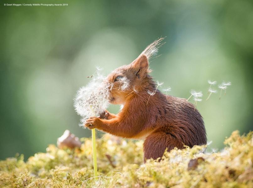 geert-weggen_squirrel-wishes_00003677