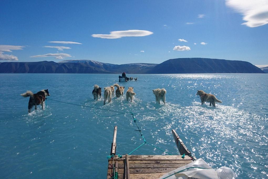 Groenlandia: ghiaccio addio, i cani da slitta