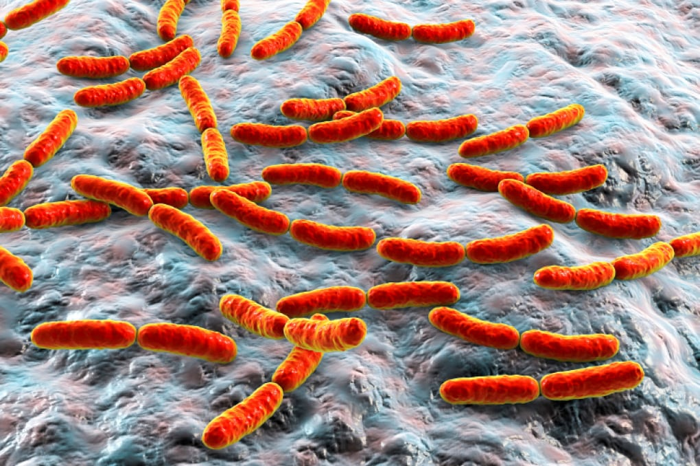 I batteri intestinali rivelano la nostra età biologica