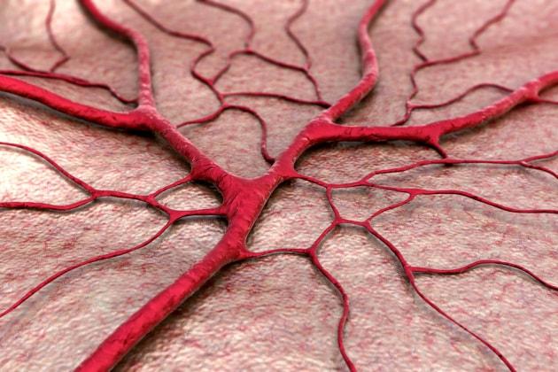 Scoperto un nuovo tipo di vaso sanguigno che attraversa le ossa umane