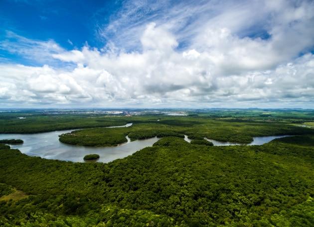 La deforestazione e l'aumento delle temperature