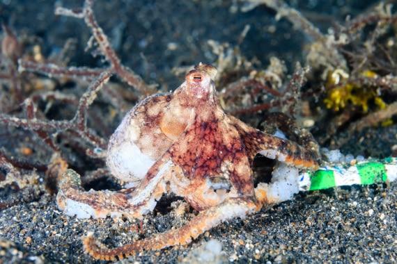 Mediterraneo di plastica: uno studio del WWF