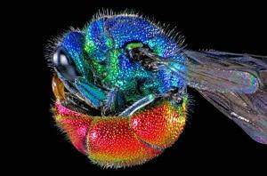 Wellcome Images, microfotografia di una vespa dalla coda rossa