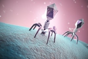 batteriofagi-contro-batteri