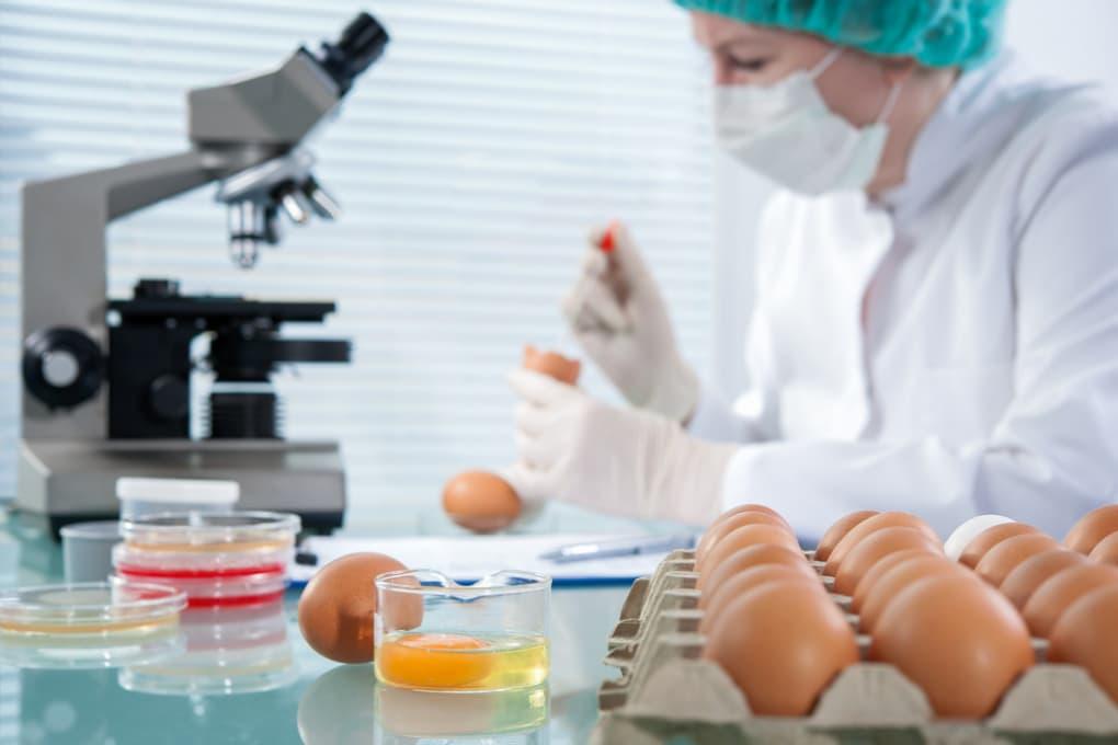 Galline geneticamente modificate: le loro uova producono