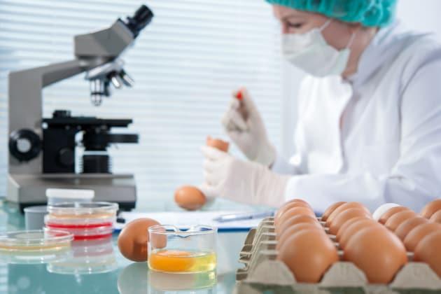 uova-galline-proteine