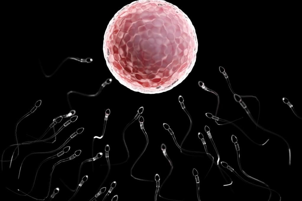L'inquinamento influisce sulla riserva ovarica delle donne in età fertile
